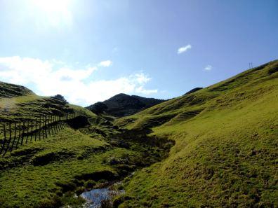 Coromandel-île du Nord