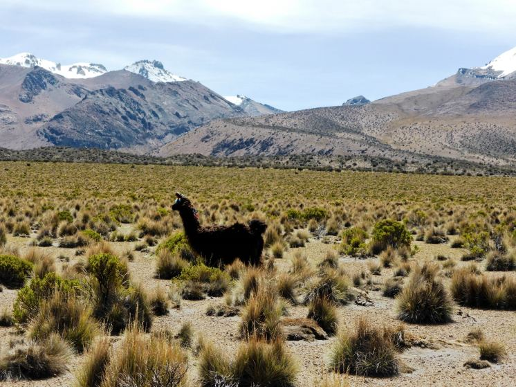 Parc National de Sajama-Bolivie (17)