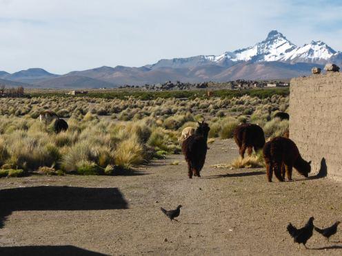 Parc National de Sajama-Bolivie (3)