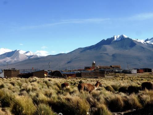 Parc National de Sajama-Bolivie (4)