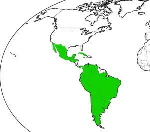 Volví a mis épocas de preescolar coloreando este mapa