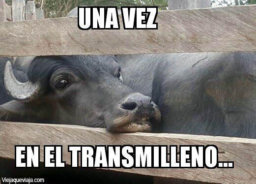 Transmilenio Bufalos