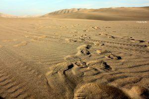 Desierto de lca