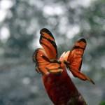 Mariposas en Putumayo, Colombia