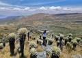 Valle de frailejones en el Páramo de Ocetá