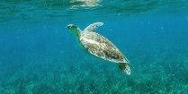 Schnorchel Tour am Belize Barrier Reef 4