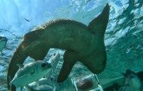 Schnorchel Tour am Belize Barrier Reef 11