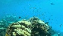 Schnorchel Tour am Belize Barrier Reef 12