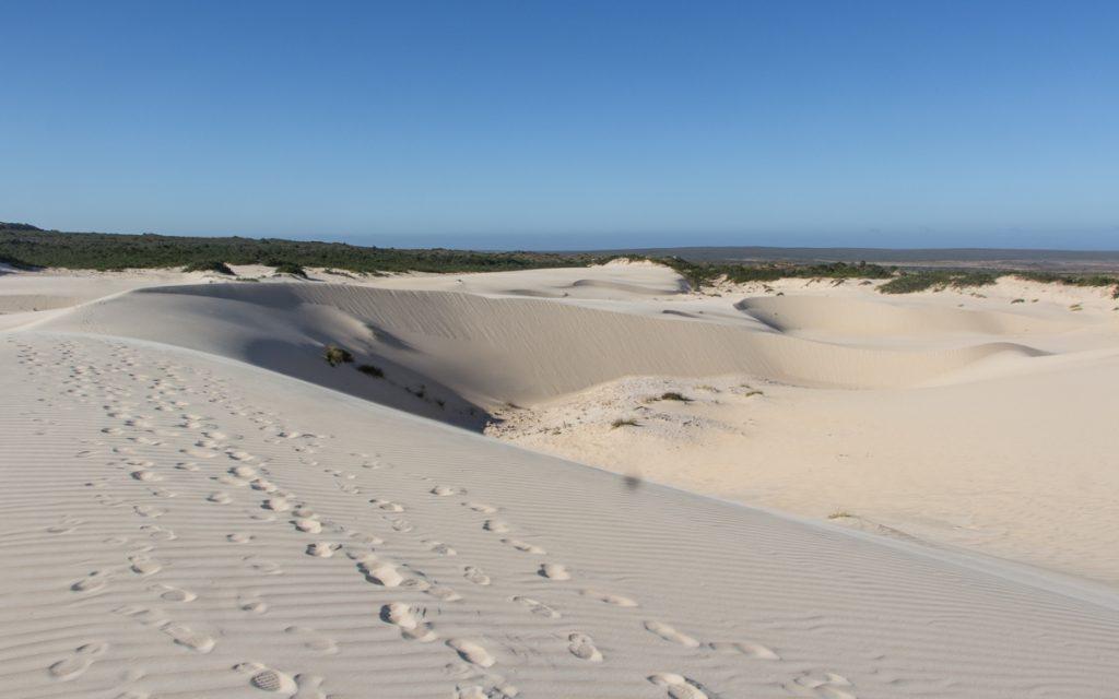 Insider tip West Coast National Park in Zuid-Afrika