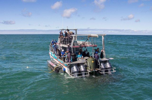 White Shark Tour Gaansbai Verfechter