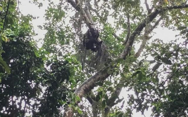 elsas-baby-gorilla-trekking-uganda-bwindi-nationalpark