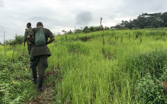 Gorilla Trekking Uganda Bwindi Felder und Guides