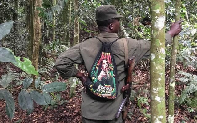 Gorilla Trekking Uganda Bwindi Nationalpark Spurenleser