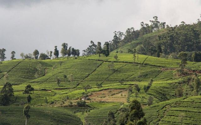 Sri Lanka Sehenswürdigkeiten: Auch eine Zugfahrt nach Ella gehört dazu