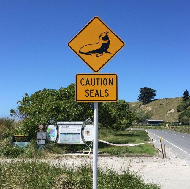kaikoura-neuseeland-mit-delfinen-schwimmen