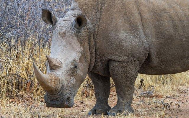 Nashorn beim Rhino Drive Waterberg Wilderness Namibia