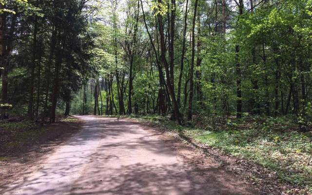 Holland Lekkerradeln Wald