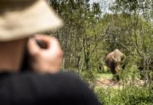 Packliste für Safaris in Afrika (Kamera & Fernglas)
