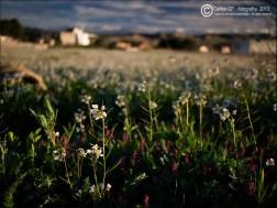 Flores silvestres (III)