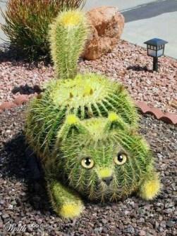 pisica cactus