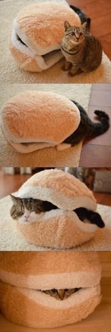 sandvis pisica