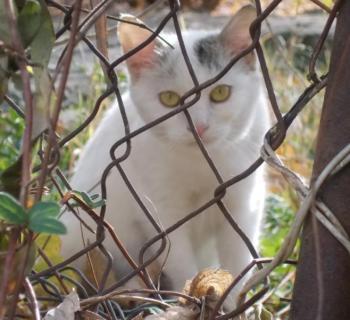 frumusete de pisica