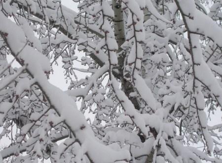 iarna in imagini frumoase 2