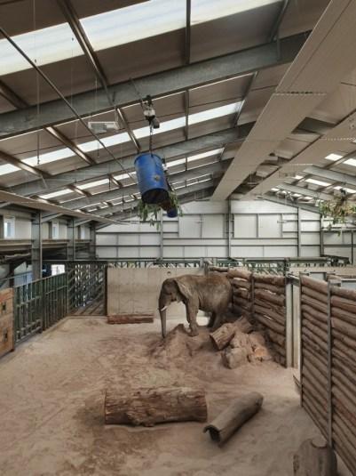 Răul uman e dincolo de gardul grădinii zoologice