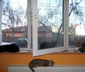 pisici-la-geam