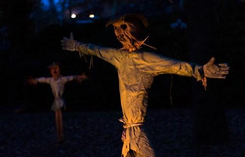 dsc_2239-1920-scarecrow-vienhoang-com
