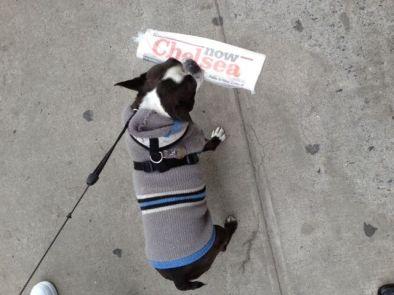 hund chelsea