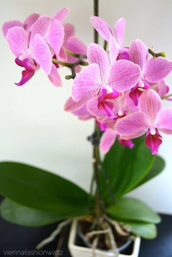 Orchidee www.viennafashionwaltz.wordpress.com