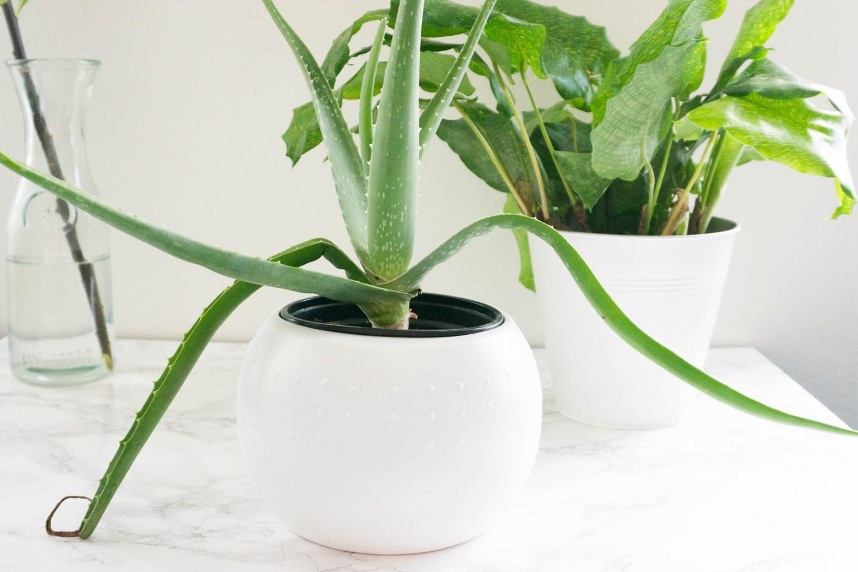Upcycling    DIY Blumentöpfe für den Indoorgarden