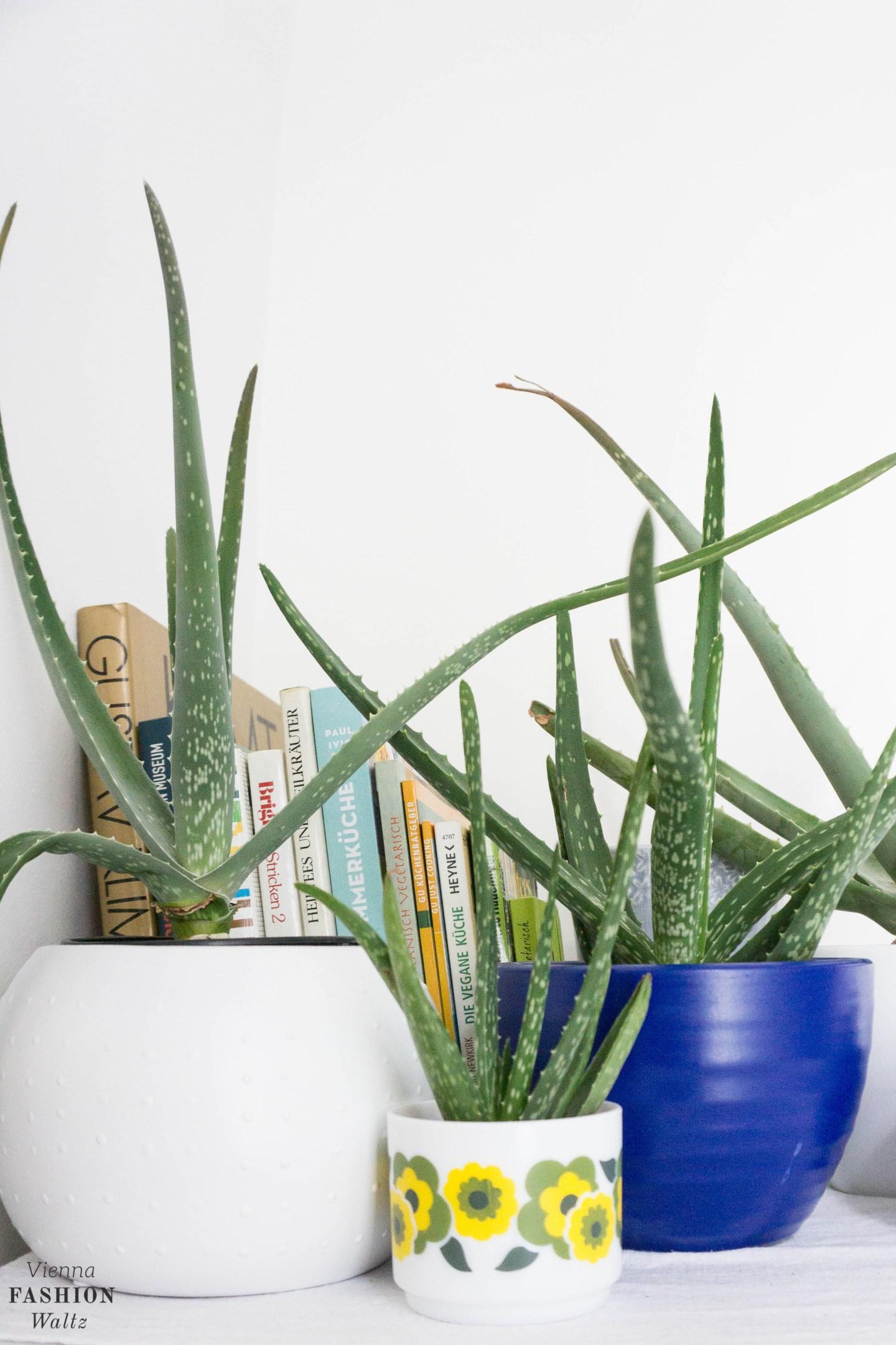 Aloe Vera Plant Gang