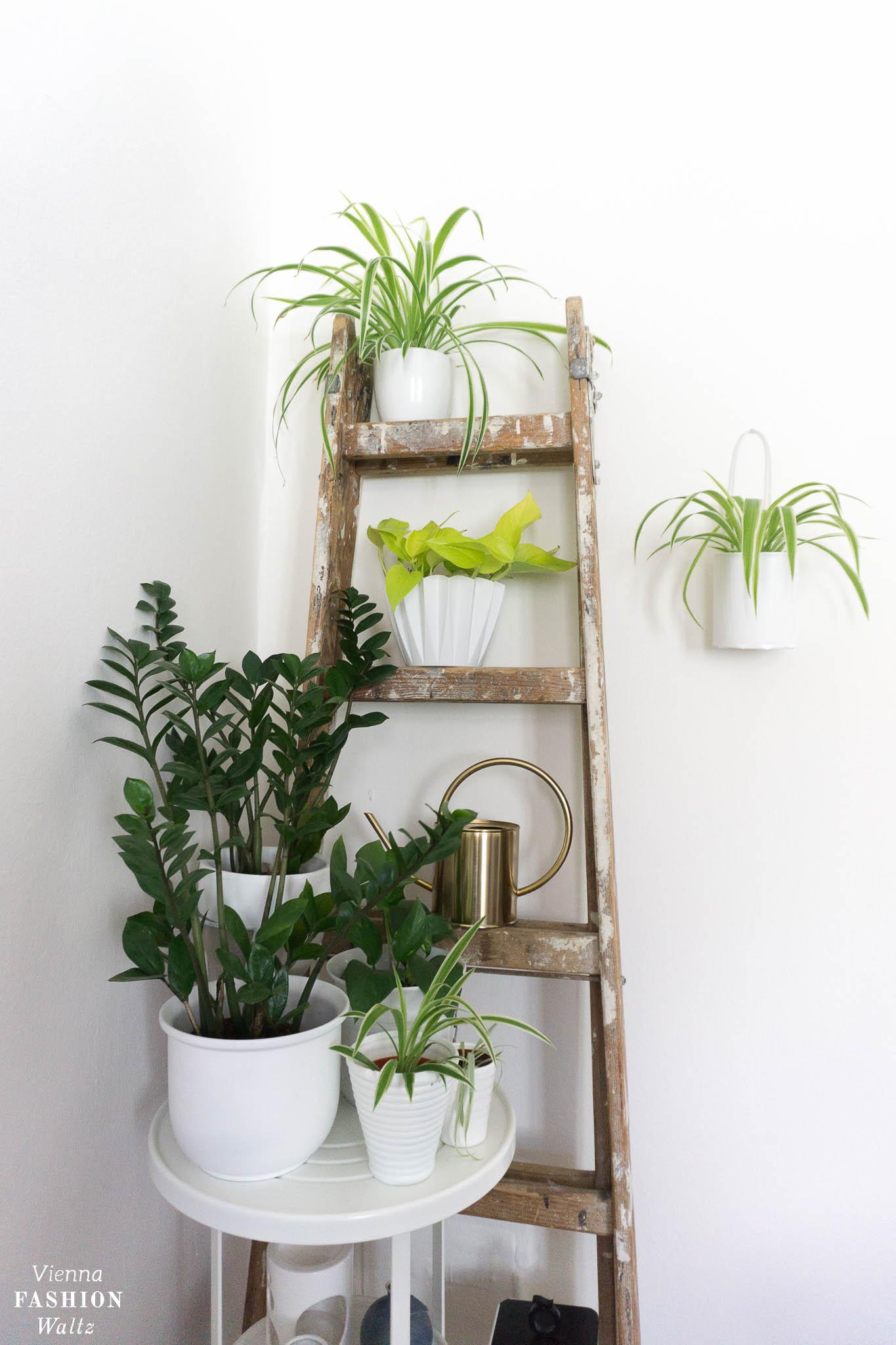 Urban Jungle Ideen | Indoor Garden Plant Ideas | Grünlilien, Pflanzenwand, hanging plants | Blog Vienna Fashion Waltz