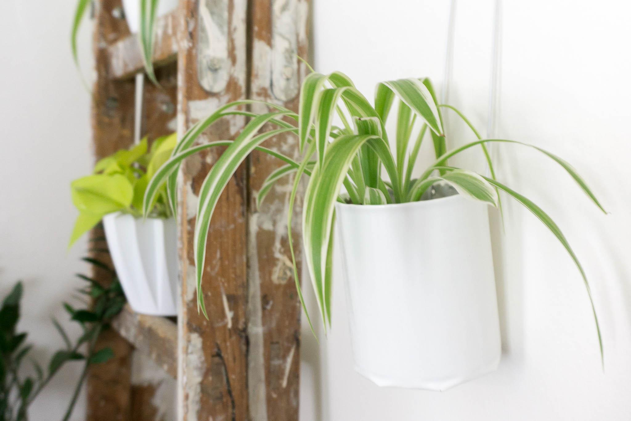 pflanzen an die wand hängen - diy inddor garden - urban jungle