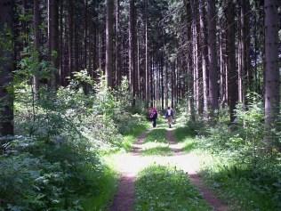 Forest Armschlag