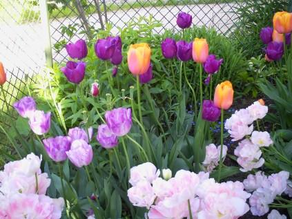 Flowers in Niedersulz