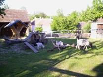 Farm in Niedersulz