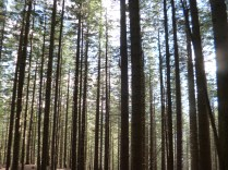 Semmering forest