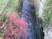 River Kamp, Zwettl