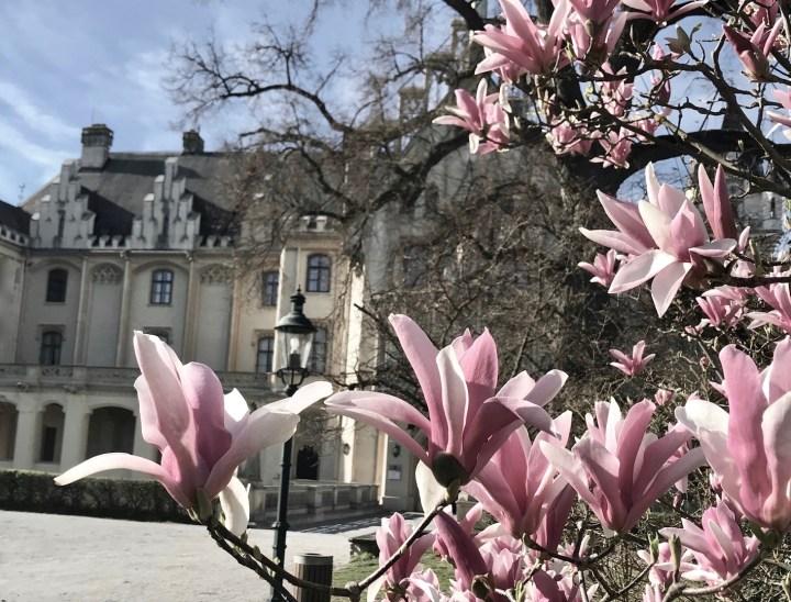 7 Wien Lifestyle-Tipps für Mai