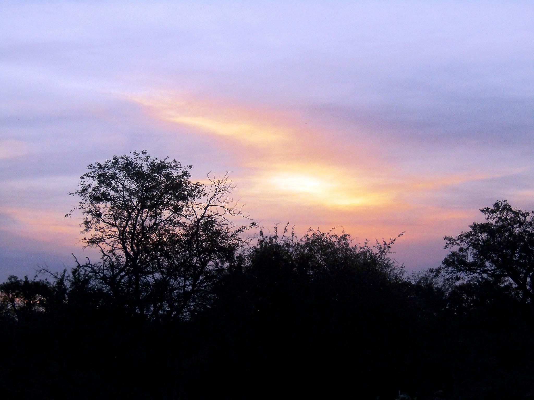 L'aube dans le parc Kruger