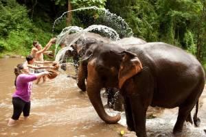 sanctuaire elephants
