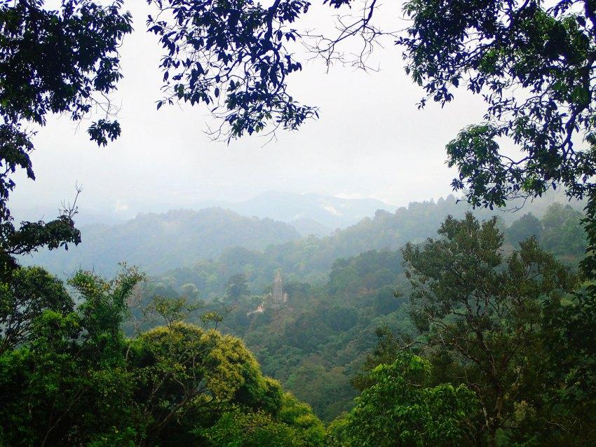 chiang dao jungle