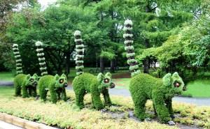 Lémuriens végétaux montreal