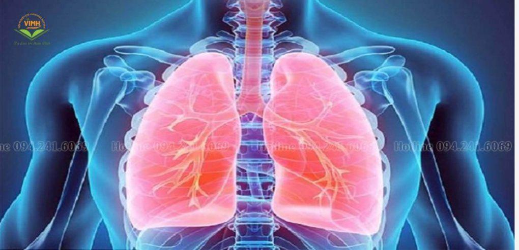 tác dụng của đông trùng hạ thảo đối với phổi