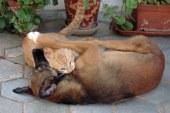 Urgencias veterinarias para perros y gatos a punto de concretarse
