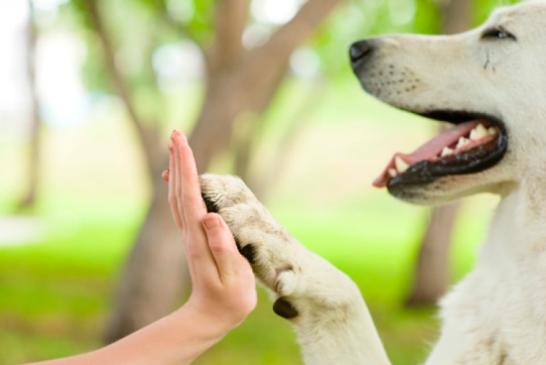 Administración local  de Antonio Nariño sigue dando resultados en protección de animales domésticos
