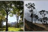 Camino a la deforestación